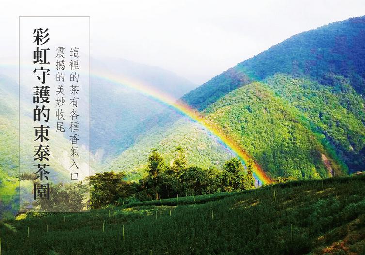 彩虹守護東泰茶園